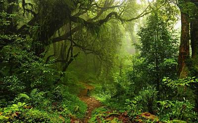 Liana Digital Art - 258259 Nature Trees Forest Leaves Lianas Mist Moss Path Plants Ferns Rainforest Jungles by Anne Pool