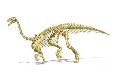 One Animal Digital Art - 3d Rendering Of A Plateosaurus Dinosaur by Leonello Calvetti