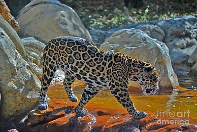 Photograph - 44- Jaguar by Joseph Keane