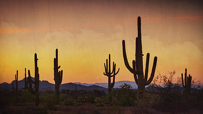 Photograph - A Beautiful Desert Morning  by Saija Lehtonen