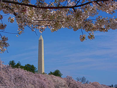 Photograph - A Capital Cherry Blossom I by Kathi Isserman