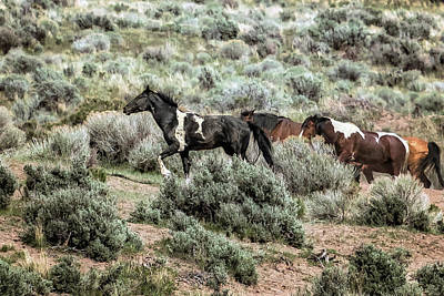 Photograph - A Day In The Lives Of South Steens Wild Horses, No. 6 by Belinda Greb