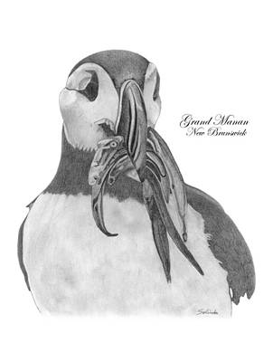 Puffin Drawing - A Day's Catch by Selinda Van Horn