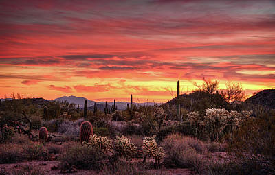 Photograph - A Desert Winter Sunset  by Saija Lehtonen