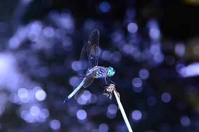 Photograph - A Dragonfly by Raymond Salani III