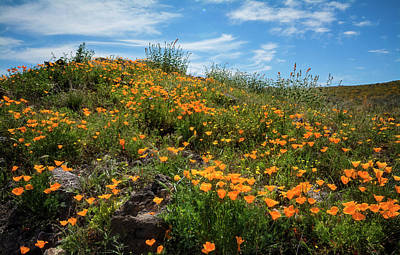 Photograph - A Field Of Golden Poppies  by Saija Lehtonen