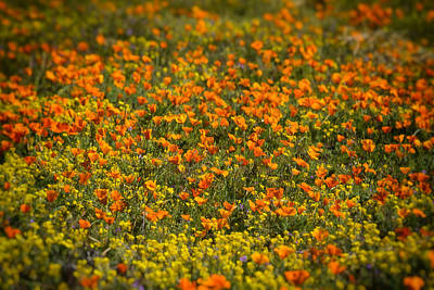 Photograph - A Field Of Wildflowers  by Saija Lehtonen
