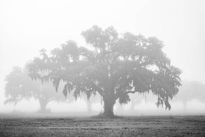 Photograph - A Foggy Morning by Chris Moore