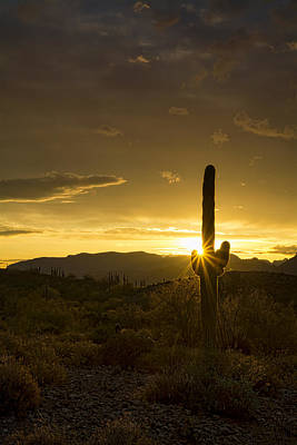 Photograph - A Golden Saguaro Sunrise  by Saija Lehtonen
