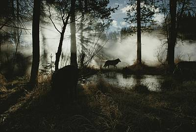 Cosmic And Atmospheric Phenomena Photograph - A Gray Wolf, Canis Lupus, In Silhouette by Jim And Jamie Dutcher