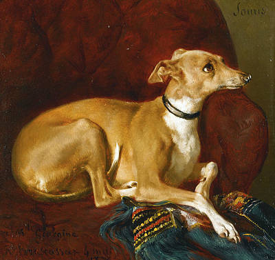 Painting - A Greyhound Resting On The A Chair by Jacques Raymond Brascassat