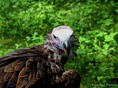 Pyrography - A Happy Vulture by Kimmary MacLean