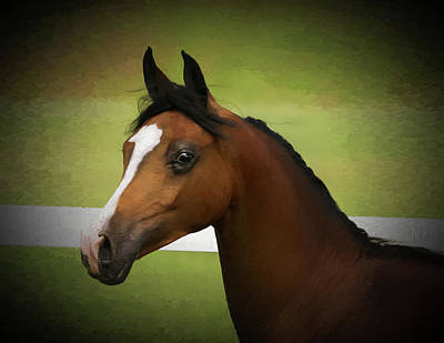 Photograph - A Head Study Of A Beautiful Arabian Filly by Rusty R Smith