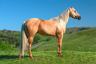Photograph - A Horse Named Shaker by Todd Klassy