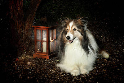 Miniature Collie Photograph - A Light In The Darkness by Pat Eisenberger