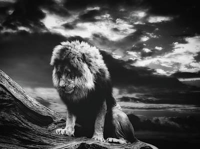 Photograph - A Lion's Prayer by Pixabay