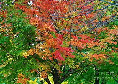 Photograph - A Michigan Fall by Robert Pearson
