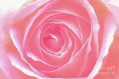 Photograph - A Pink Rose  by Scott Cameron