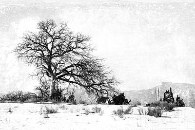 Photograph - A Placid Winter Scene Bw by Gabriele Pomykaj