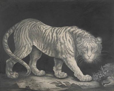 Drawing - A Prowling Tiger by Elizabeth Pringle