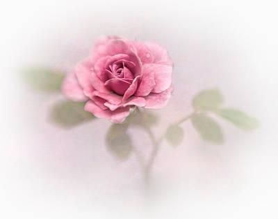 Photograph - A Rose by David and Carol Kelly