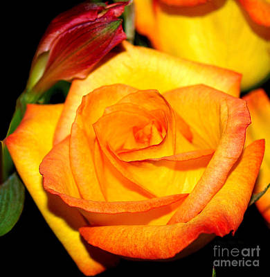 Photograph - A Rose Is A Rose by Patricia Griffin Brett