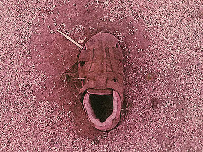 Photograph - A Shoe by Stan Magnan