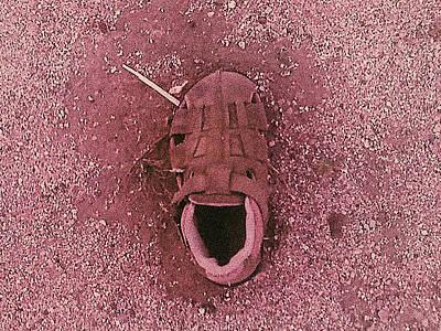 Photograph - A Shoe by Stan Magnan