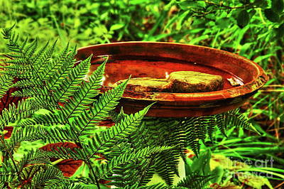 Photograph - A Simple Birdbath by Allen Nice-Webb