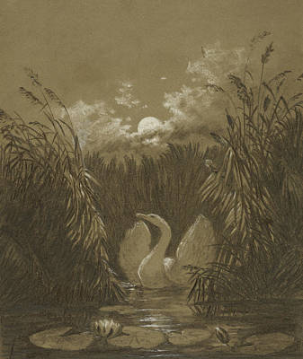 Swan Drawing - A Swan Among The Reeds, By Moonlight by Carl Gustav Carus