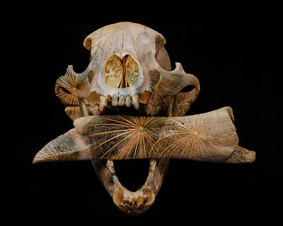 Photograph - A Taste For Bones by Ronda Broatch