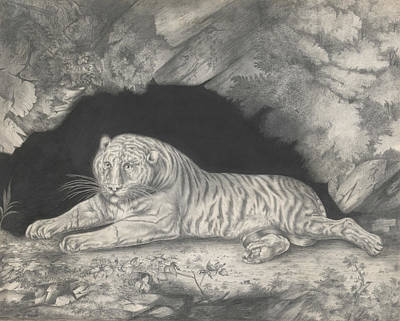 A Tiger Lying In The Entrance Of A Cave Art Print