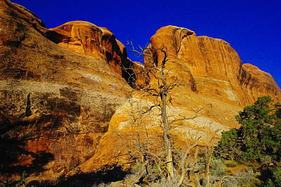 Capital Reef Photograph - A Tree Foreground The Rocks by Jeff Swan