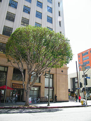 Photograph - A Tree Grow In Front Of Cooper Building Color by Hold Still Photography