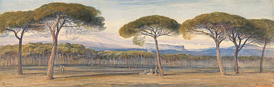 Drawing - A View Of The Pine Woods Above Cannes by Edward Lear