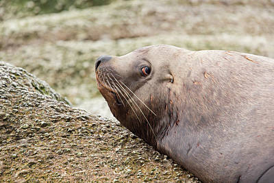 Cape Look Out Photograph - A Wary Glance by Tim Grams