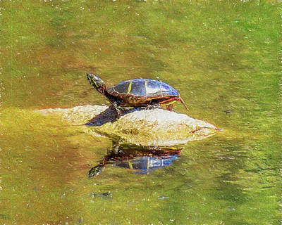 Digital Art - A Young Painted Turtle. by Rusty R Smith