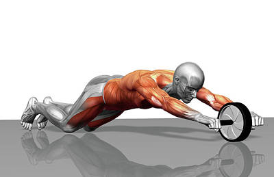 Biomedical Illustration Photograph - Ab Wheel Exercise by MedicalRF.com