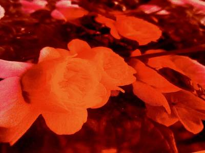 Photograph - Abstract Flowers #13 by Stephanie Moore