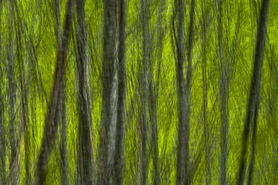 Mountains Photograph - Abstract Red Alder Branches In Spring Motion by Ed Book