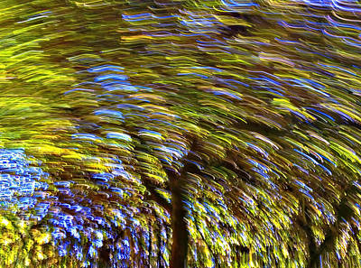 Photograph - Abstract Trees by Susan Leggett