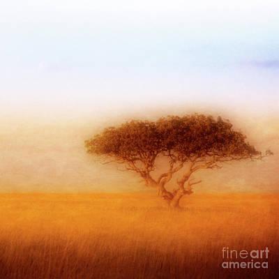 Photograph - Acacia by Scott Kemper