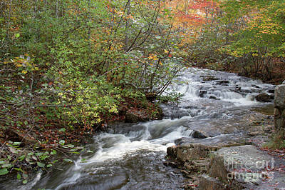 Photograph - Acadia Duck Brook by Chris Scroggins