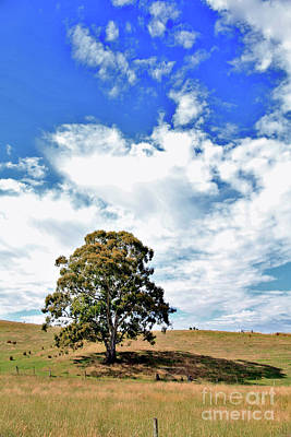 Photograph - Adelaide Hills by Stephen Mitchell