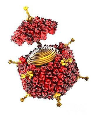 Vertex Photograph - Adenovirus Structure, Artwork by Ram�n Andrade, 3Dciencia