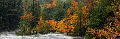 Photograph - Adirondack Colors by Brad Hoyt