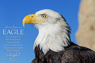 Photograph - Advice From An Eagle by Teri Virbickis