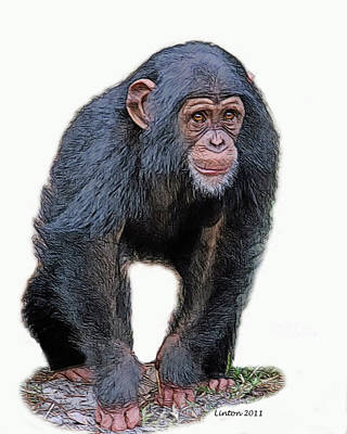 Chimpanzee Digital Art - African Chimpanzee by Larry Linton