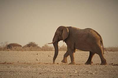 Photograph - African Elephant by Ernie Echols