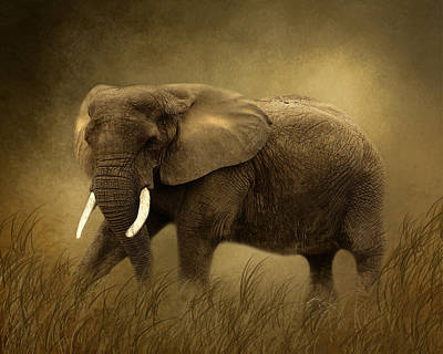 African Elephant Art Print by TnBackroadsPhotos